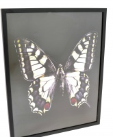Graham & Brown. Gothic Butterfly Framed Print ( 40 x 50 cm)